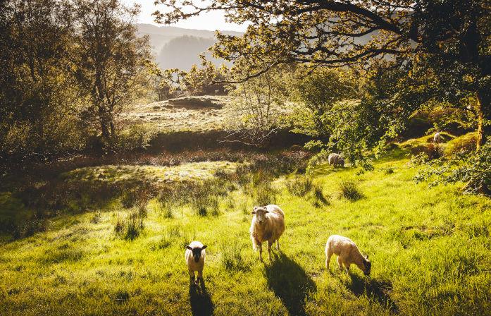 The Lake District Explorer - 3 day tour | London| Rabbie's