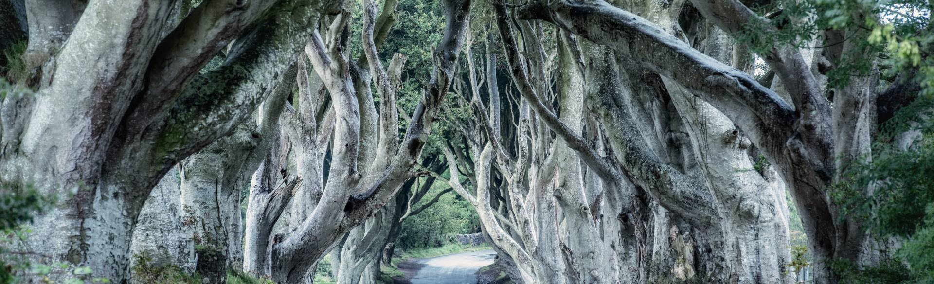 Where are the best Game of Thrones locations in Northern Ireland?